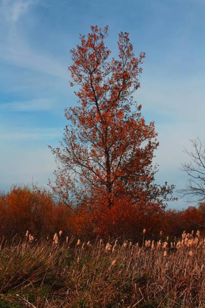 Photograph - Lone Tree by David Matthews