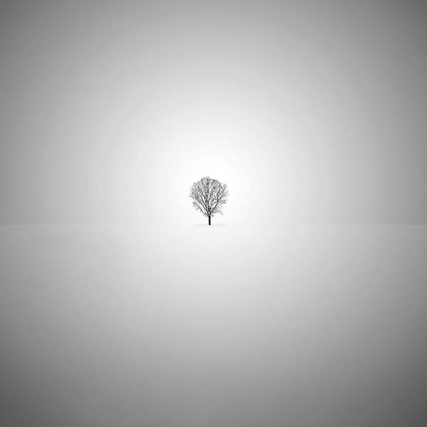 Photograph - Lone Tree by Mihai Andritoiu
