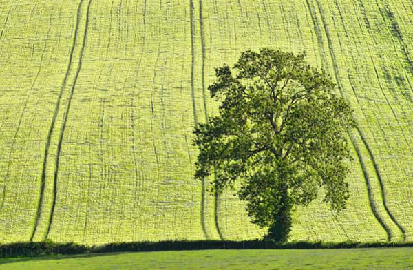 Photograph - Lone Tree by Pete Hemington