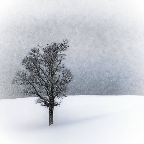 Hiking Digital Art - Lonely Tree Idyllic Winterlandscape by Melanie Viola