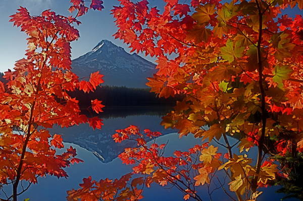 Photograph - Lost Lake Autumn by Todd Kreuter
