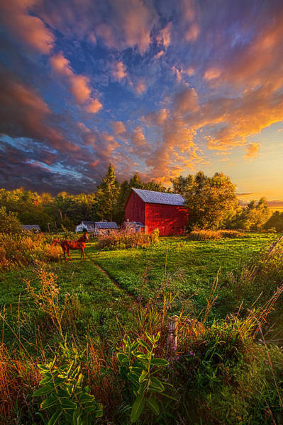 Beautiful Horse Wall Art - Photograph - Love's Pure Light by Phil Koch