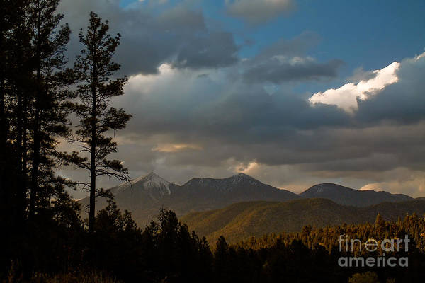 Photograph - Low Sun In Spring by Michael Smith-Sardior
