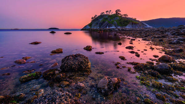Photograph - Low Tide  by John Poon