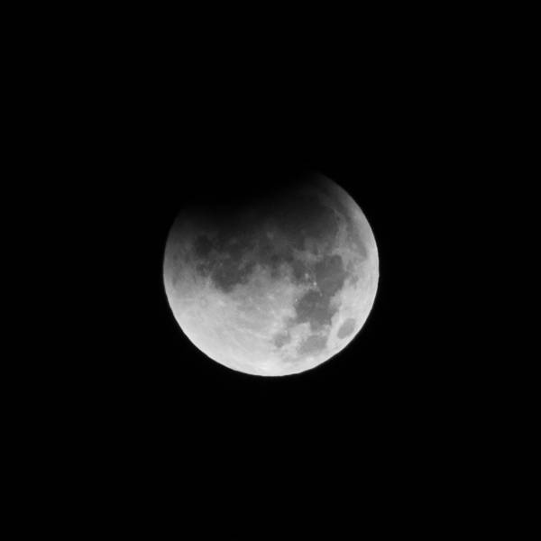 Photograph - Lunar Eclipse- Beginning by Colleen Coccia