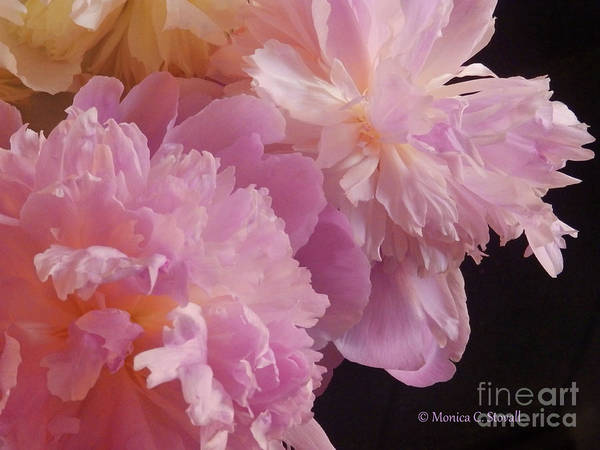 Photograph - M Shades Of Pink Flowers Collection No. P66 by Monica C Stovall