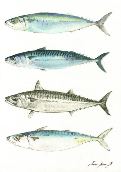 Fishing Wall Art - Painting - Mackerel Fishes by Juan Bosco