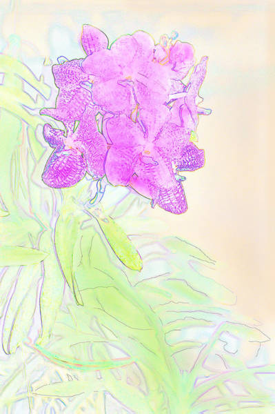 Photograph - Magenta Orchids by Gene Norris