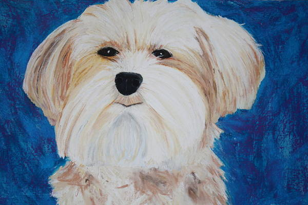 Painting - Maggie by Melinda Etzold