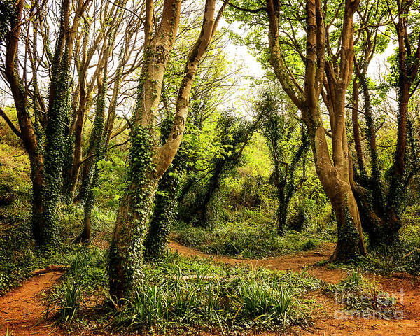 Photograph - Magic Woods by Edmund Nagele