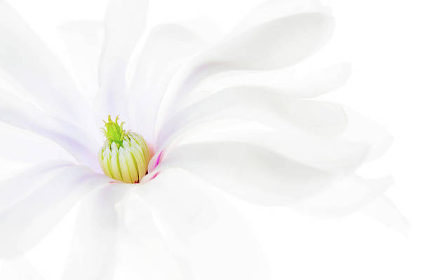 Wall Art - Photograph - Magnolia by Rebecca Cozart