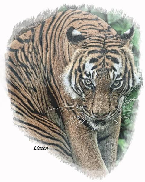 Digital Art - Malayan Tiger by Larry Linton