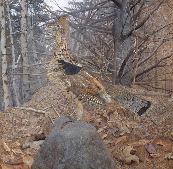 Wall Art - Painting - Male Ruffed Grouse In The Forest by Gerald Thayer