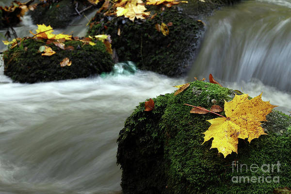 Wall Art - Photograph - Maple Leaf On Boulder Covered With Moss by Michal Boubin