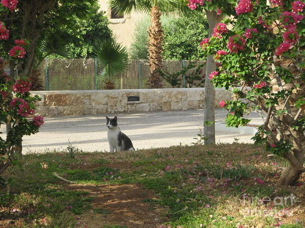 Photograph - Marriott Jordan Cat #4 Context by Donna L Munro