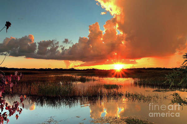 Wall Art - Photograph - Marsh Sunset by Rick Mann