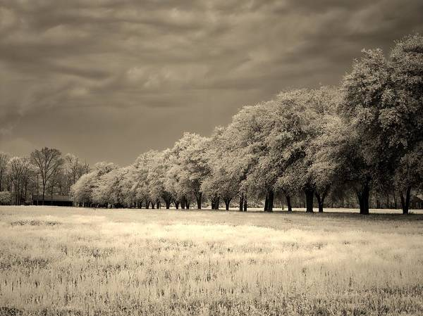 Thicket Photograph - Meadow In Infrared by L O C