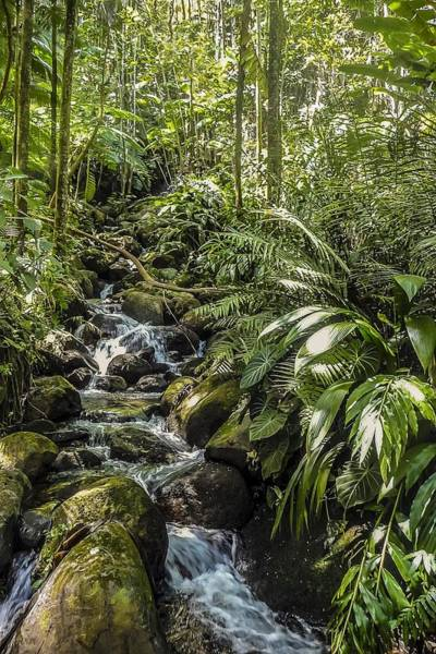 Photograph - Meandering Stream Hawaii  by NaturesPix