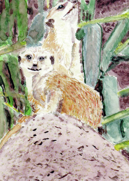 Painting - Meerkats by Barry Jones