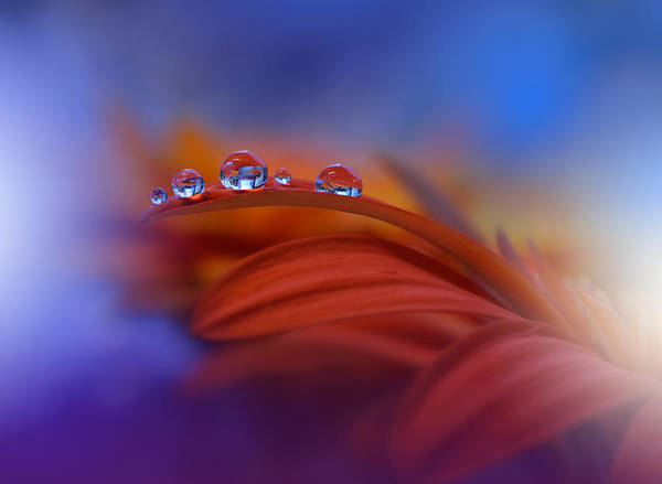 Red Flower Photograph - Metamorphosis by Juliana Nan