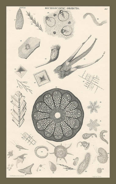 Wall Art - Drawing - Microscopic Objects by Dreyer Wildlife Print Collections