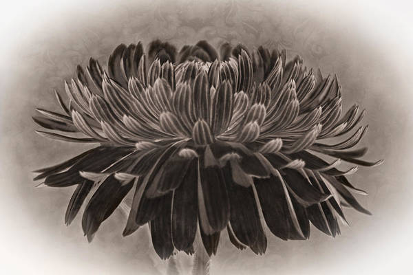 Photograph - Middle Of May Flower by Theo O'Connor