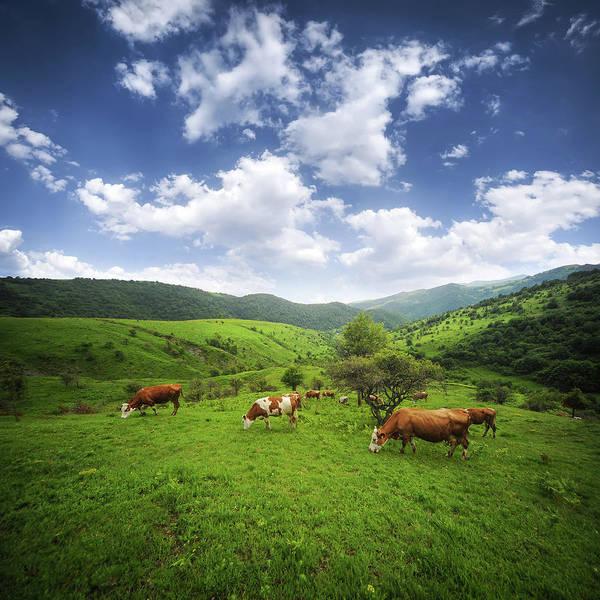 Milk Farm Photograph - Milka by Bess Hamiti