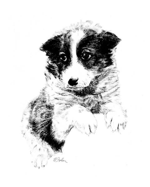 Mutt Drawing - Miss Maggie by Edward Farber