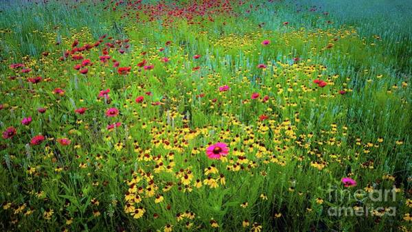 Photograph - Mixed Wildflowers In Bloom by D Davila