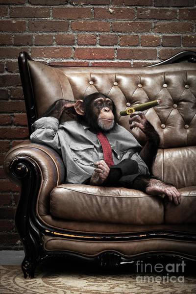 Wall Art - Photograph - Monkey Having A Cigar by Lise Gagne
