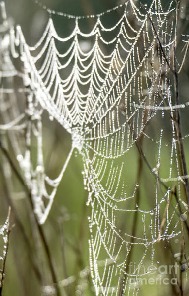 Photograph - Morning Dew On A Web by Odon Czintos