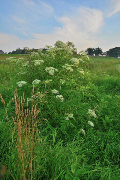 Photograph - Morning In Glacial Park's Lost Valley by Ray Mathis