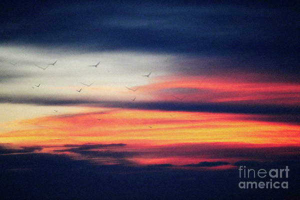 Photograph - Morning Sunrise Brilliant by Donna L Munro