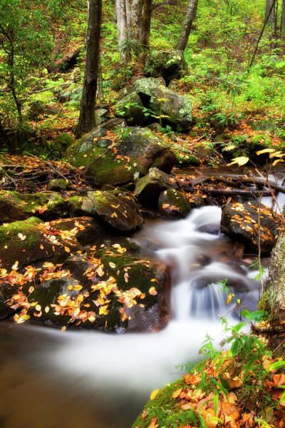 Photograph - Mountain Creek by Jill Lang