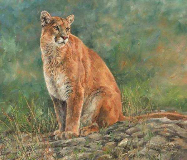 Mountain Lion Painting - Mountain Lion by David Stribbling