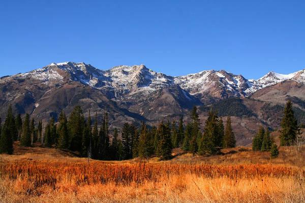 Photograph - Mountain Meadow 34 by Mark Smith