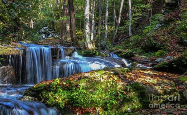 Photograph - Mountain Stream Falls by Tom Claud