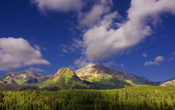 Photograph - Mountain Summer by Mark Smith