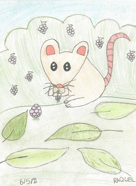 Drawing - Mouse Picking Berries by Fred Hanna
