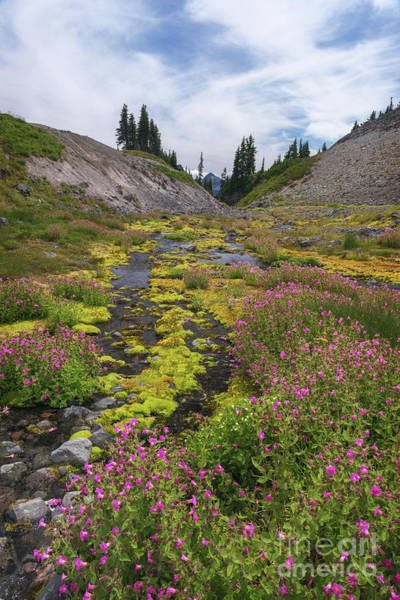 Photograph - Mt Rainier National Park by Sharon Seaward