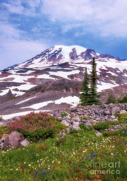 Photograph - Mt Rainier by Sharon Seaward