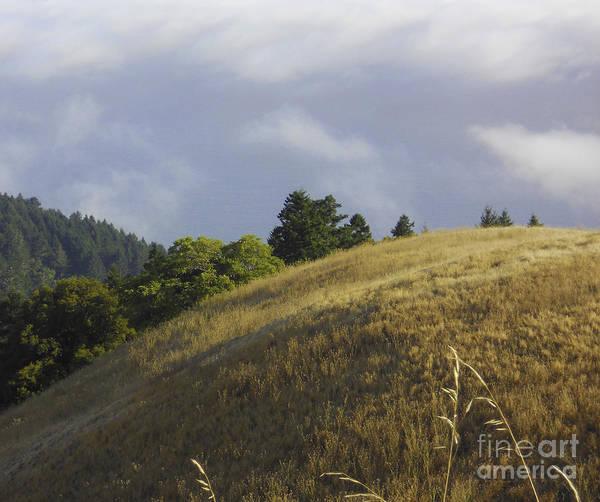 Mt. Tamalpais Study #1 Art Print