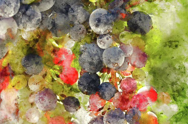 Photograph - Multi Color Grapes On The Vine by Brandon Bourdages