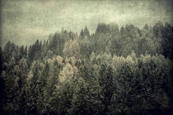 Photograph - Mystic Woods by Vittorio Chiampan