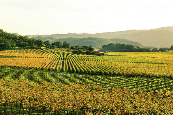 Photograph - Napa Valley California In Autumn by Brandon Bourdages