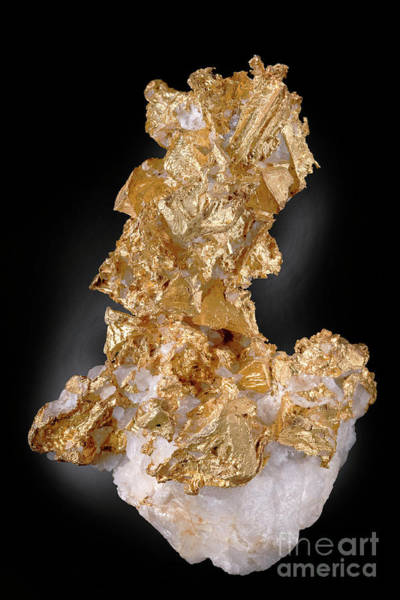 Wall Art - Photograph - Native Gold On Quartz by Science Photo Library