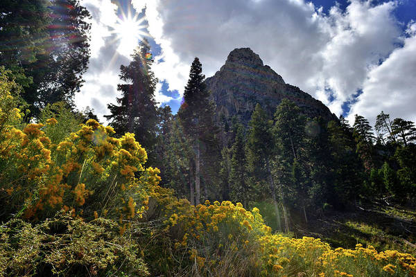 Photograph - Natural Area Beneath Mt. Charleston by Ray Mathis