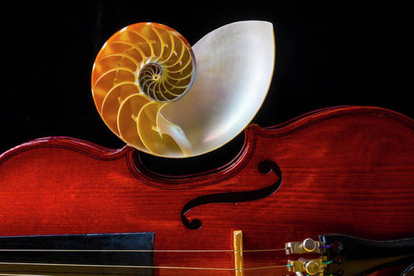 Bluegrass Photograph - Nautilus Shell On Violin by Garry Gay