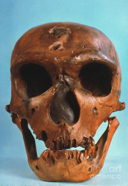 Photograph - Neanderthal Skull by Granger