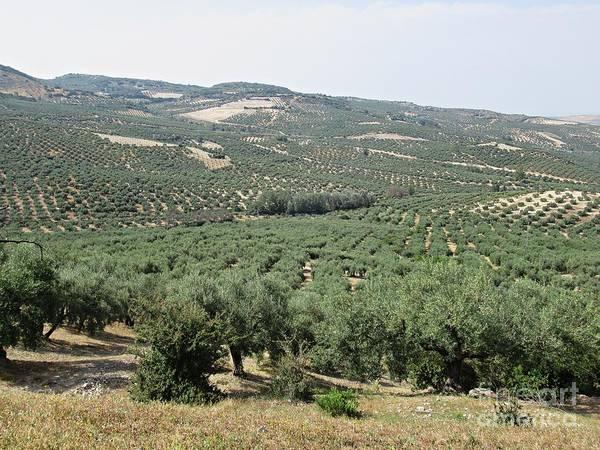 Photograph - Near Zuheros by Chani Demuijlder